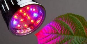Фитолампа из светодиодов
