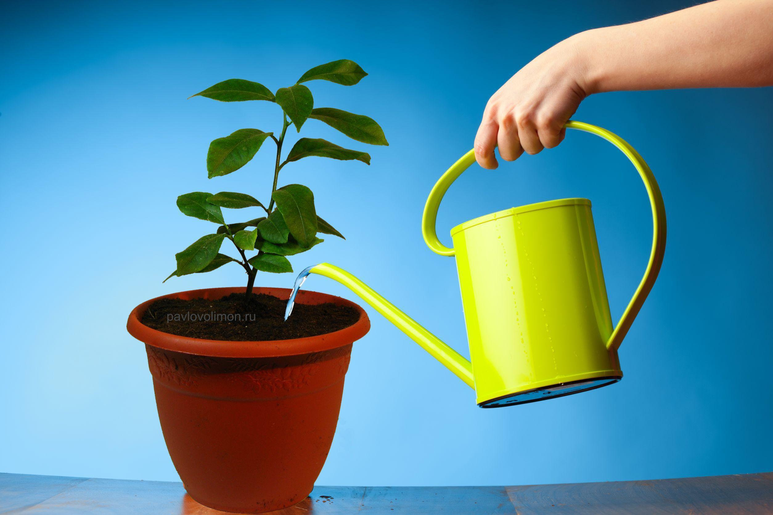 Уход и условия для домашних растений