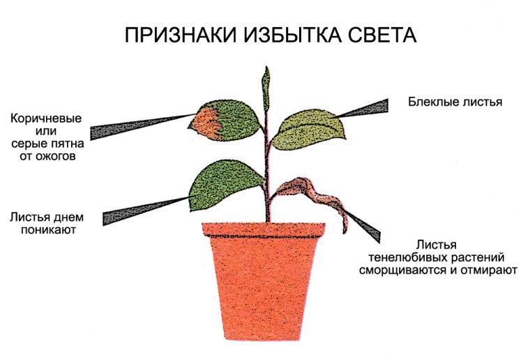 Избыток света у растений