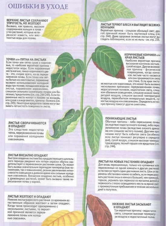 Памятка по уходу за домашними растениями