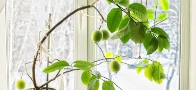 Павловский лимон фото