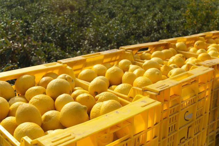 Для того, чтобы фрукты не испортились при хранении и транспортировке они подвергаются серьезной химической обработке