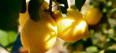 Лимон на солнце