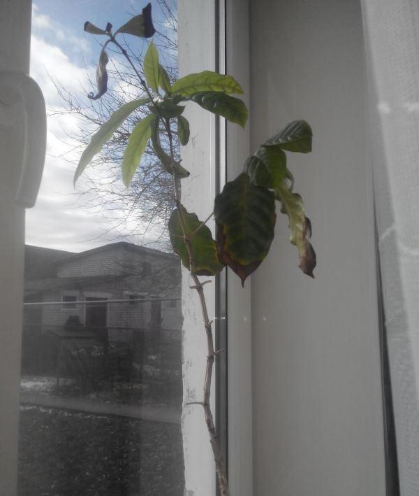 Вытянутое растение