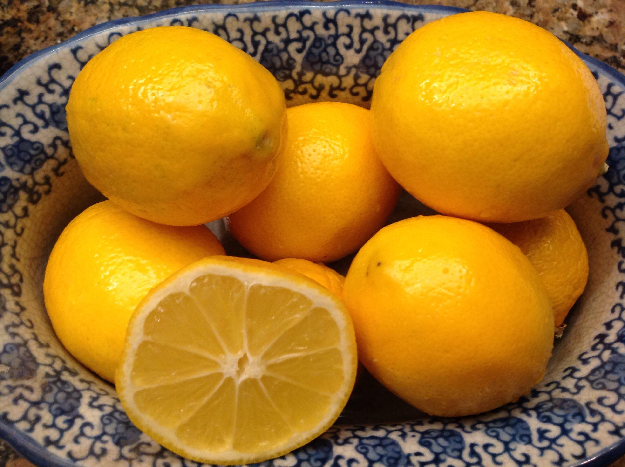 Фото плодов лимона Мейера