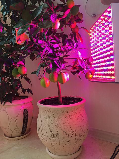 Подсветка растения зимой