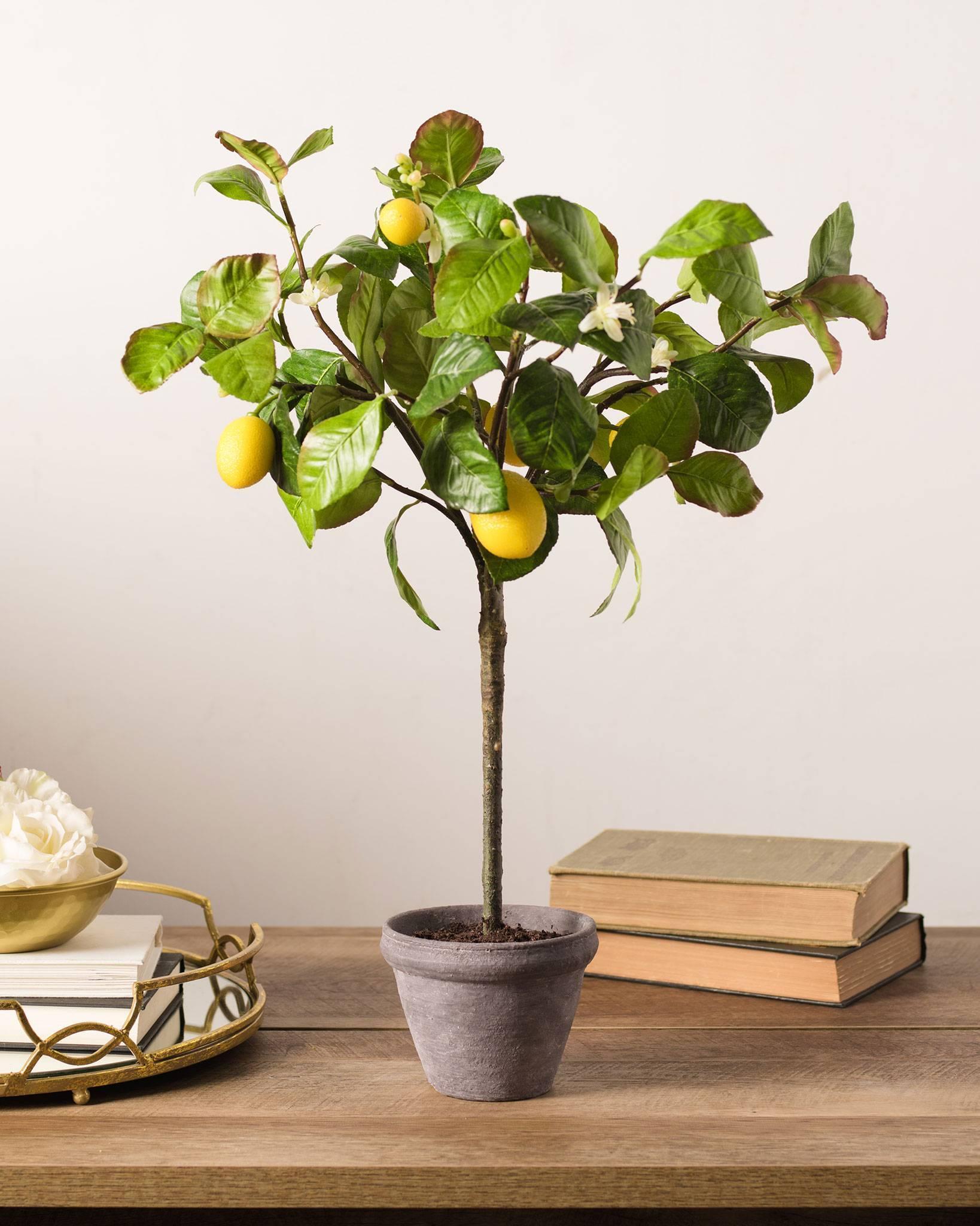 Лимон на решетке как ухаживать