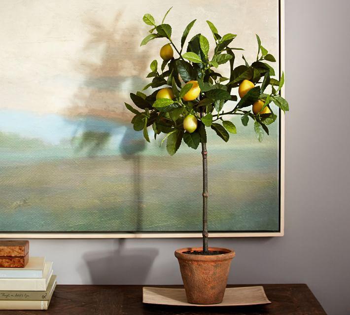 Домашний лимон в интерьере