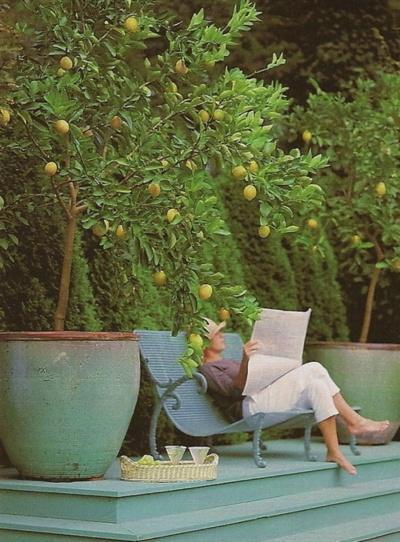 Лимоны с саду