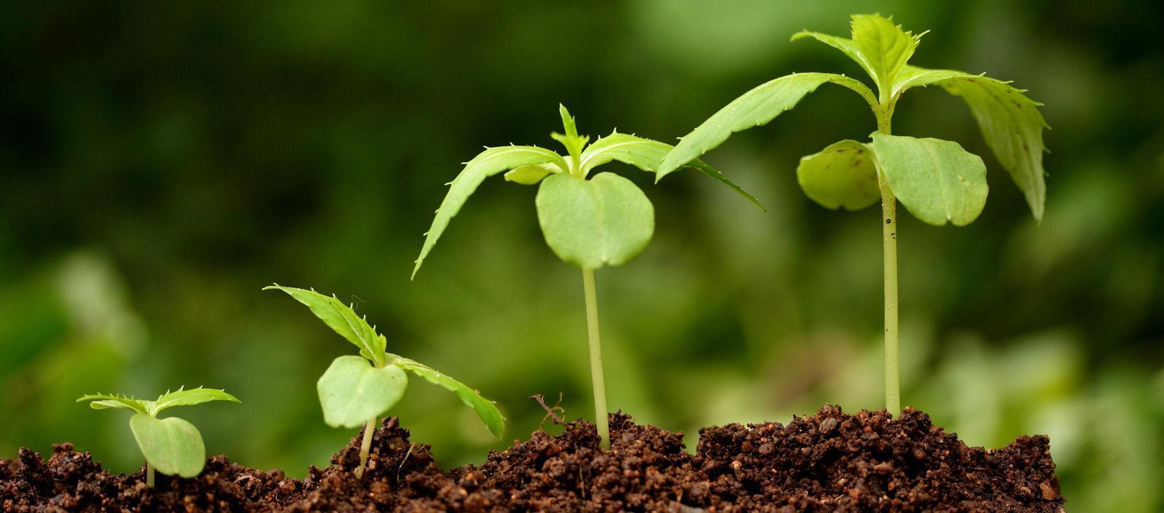 Как ускорить рост растений в домашних условиях