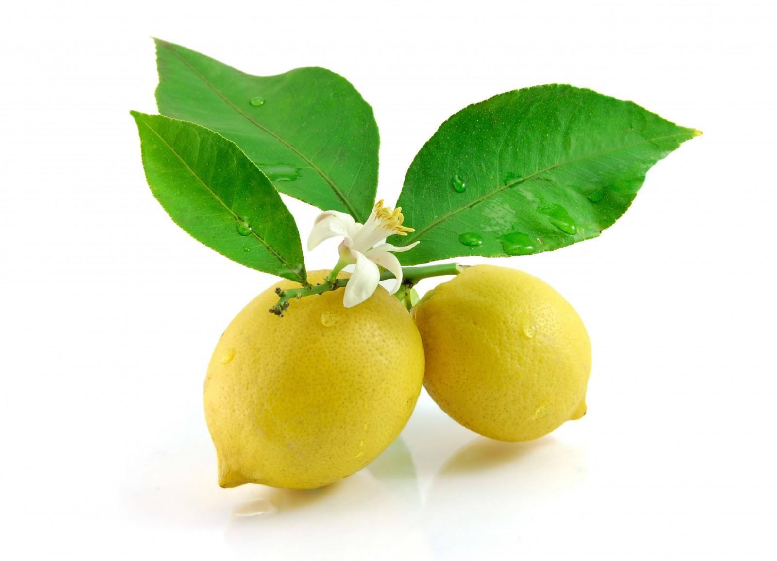 Фотография и описание лимонных листьев