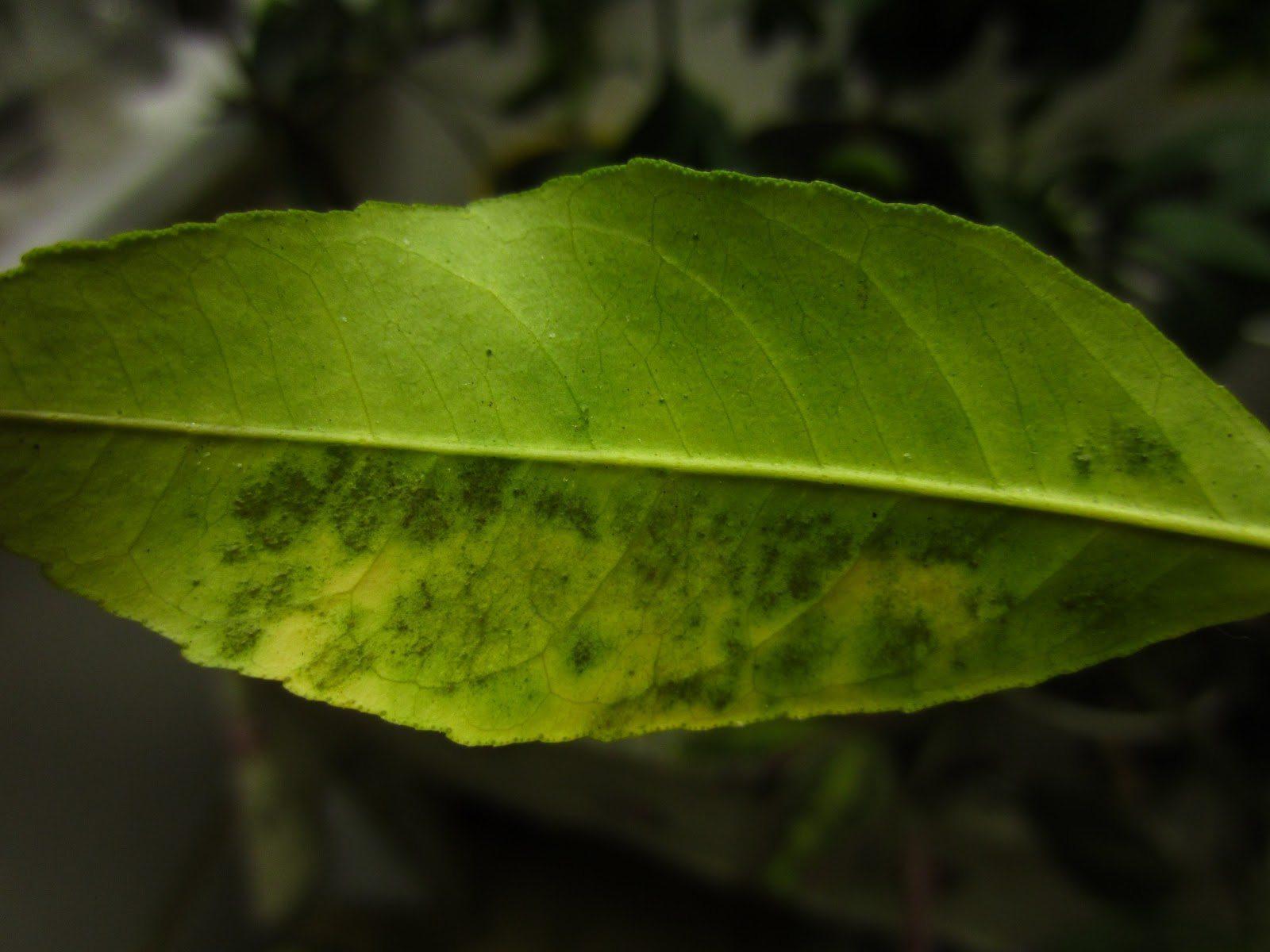 Фунгициды - средство от грибка на растениях