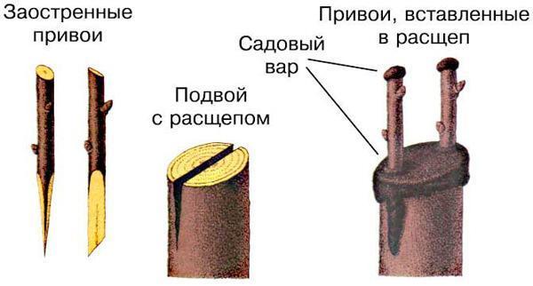 Методы прививки растений