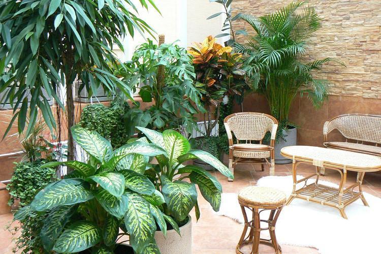 Экзотические растения растут дома