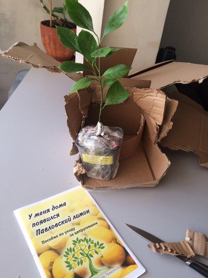 Растение почтой