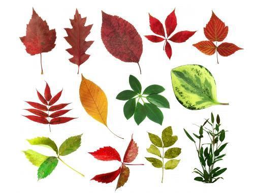 Листья растений