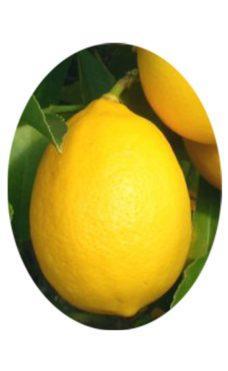 Лимон мейера с плодом