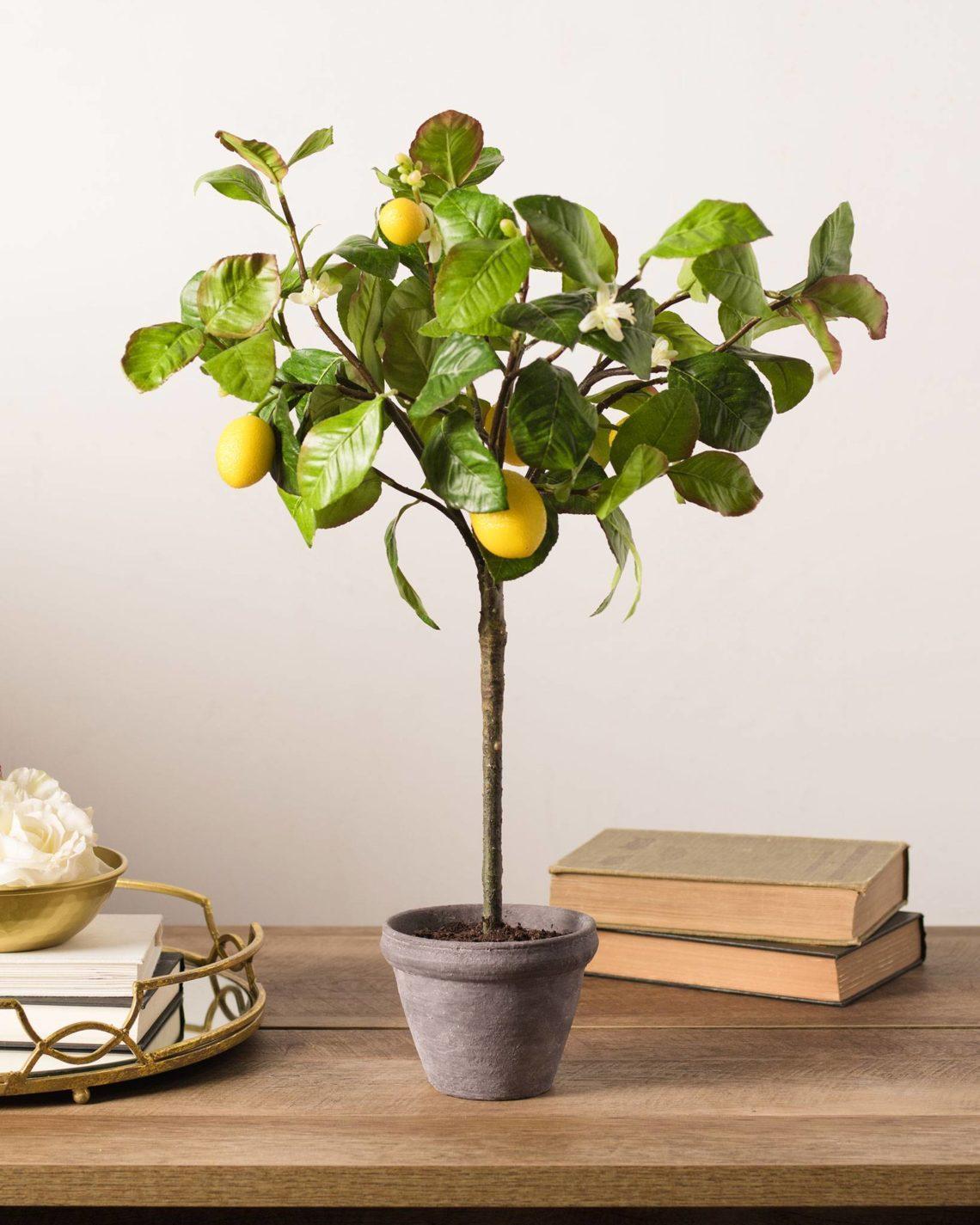 Лимон павловский уход в домашних условиях
