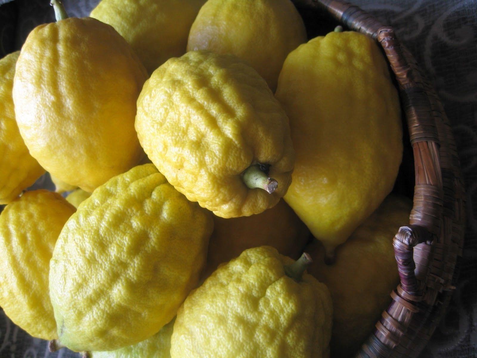 Шишкан цитрон плоды фото
