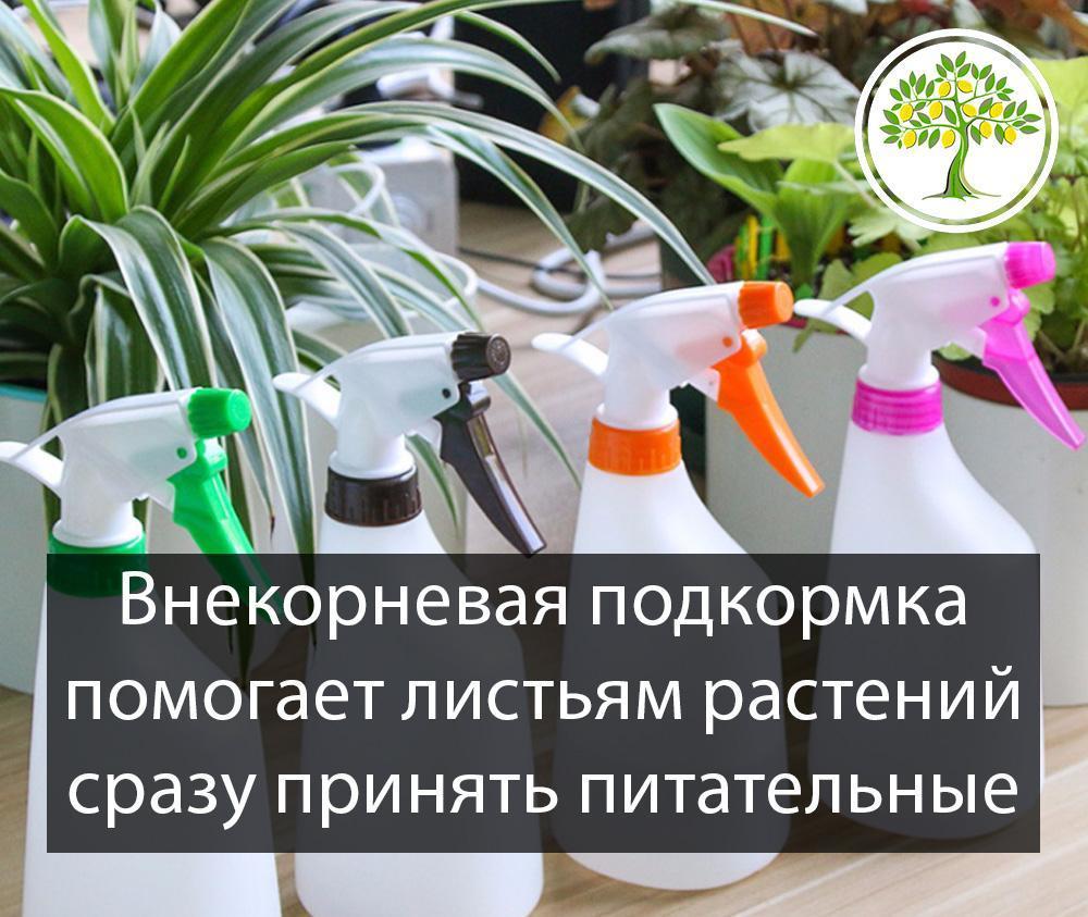 Внекорневая подкормка цитрусовых