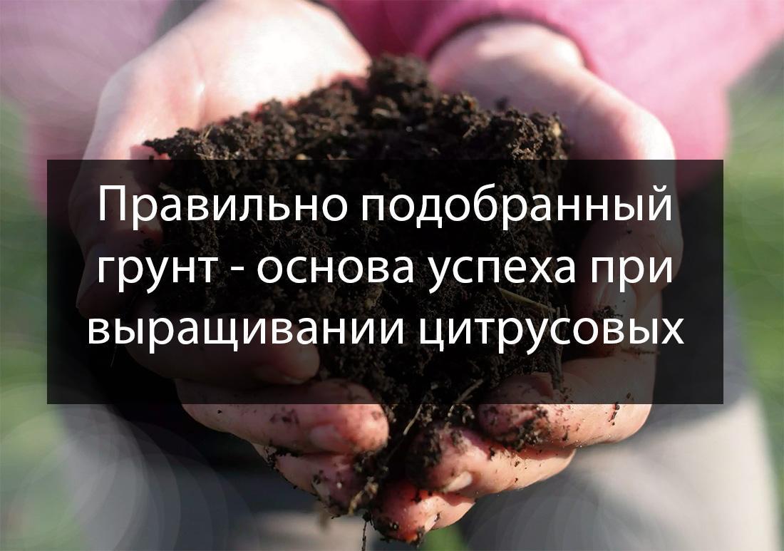 грунт для цитрусовых купить