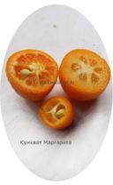 Мякоть плодов кумквата маргарита