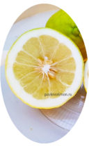 Лимон пандероза разрезан фото