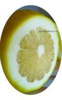 Лимон пандероза срез фото
