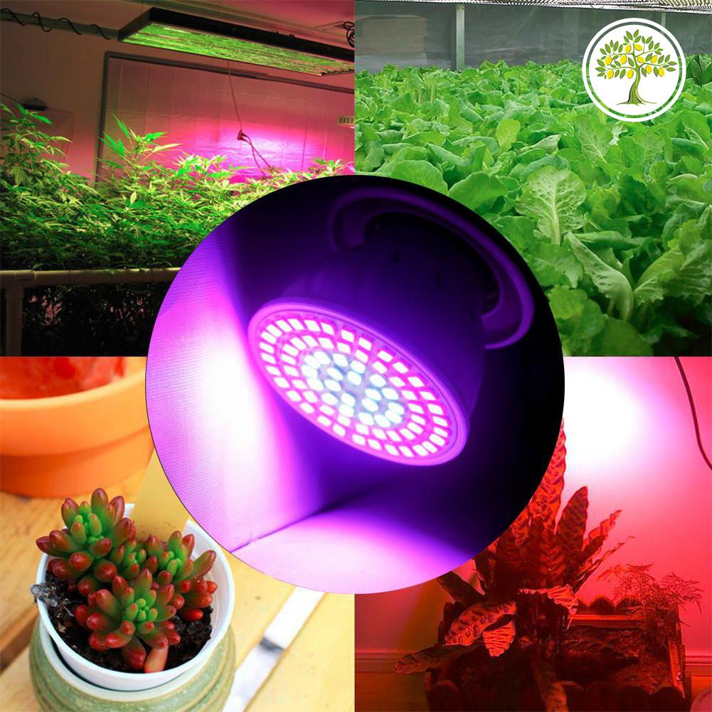 Светодиодная лампа для растений купить