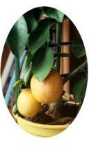 Средство от клеща на цитрусовых