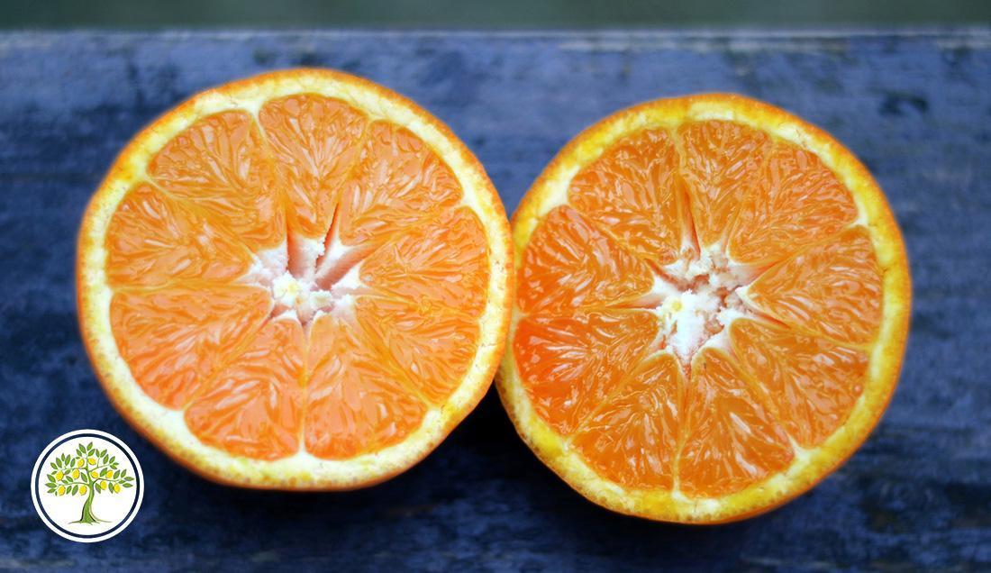 Плоды с саженца комнатного мандарина