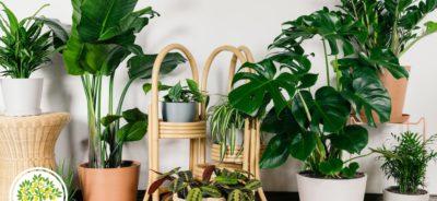Изображение зеленых домашних растений