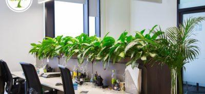Фото офиса и экзотические растения