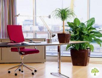 Фото экзотические растения в офисе