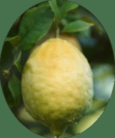 Фото новозеландского лимона