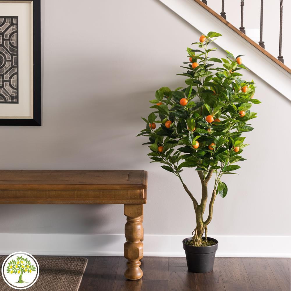 Фото дерева домашнего апельсина