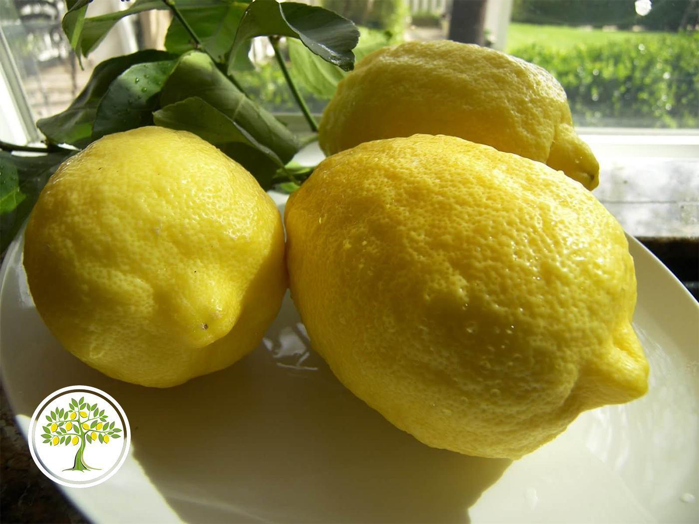 Плоды Новозеландского лимона
