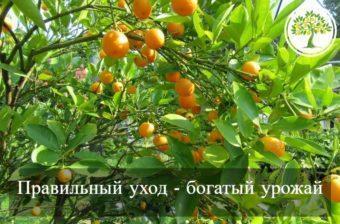 Фото здоровых плодо