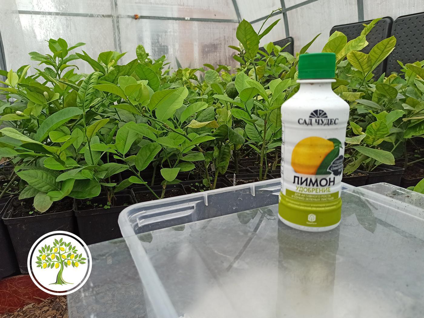 Удобрение для лимона на основе биогумуса