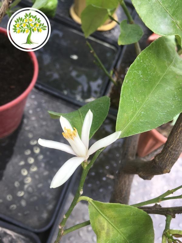 цветение экзотических растений