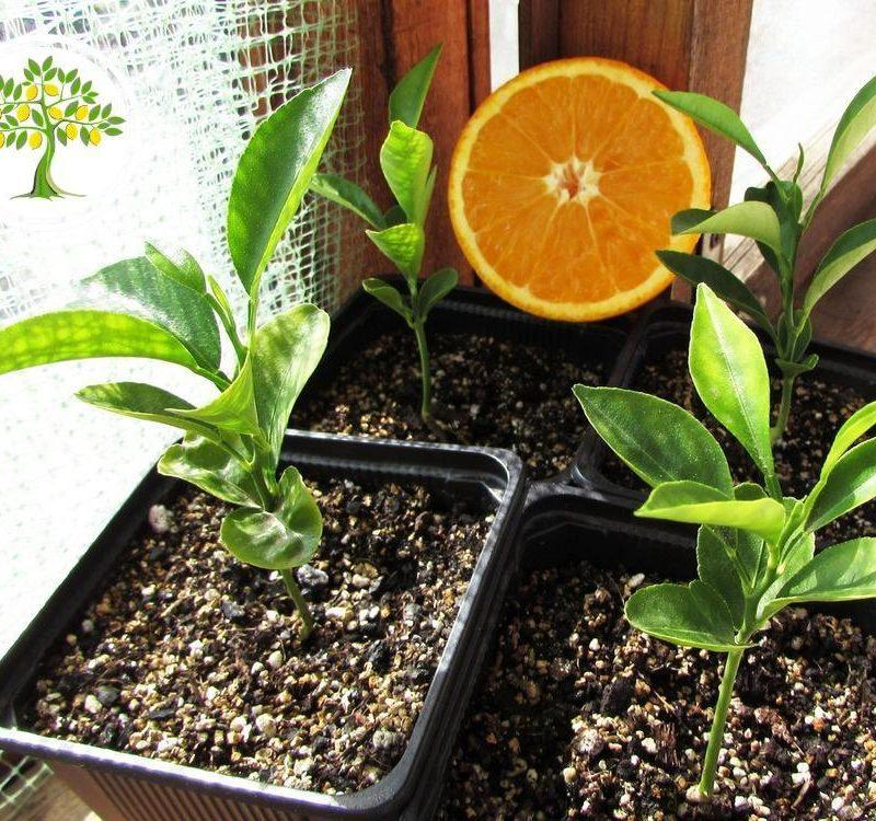 горшечные экзотические растения фото