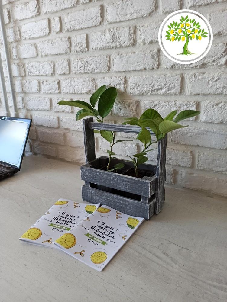 комнатные растения в Саратове
