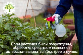 обработка цитрусовых