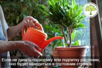 фото полива растения