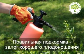 Фото подкормки растения