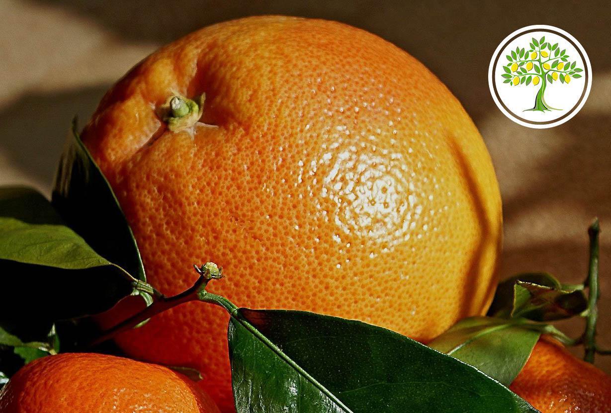 Апельсин купить саженец