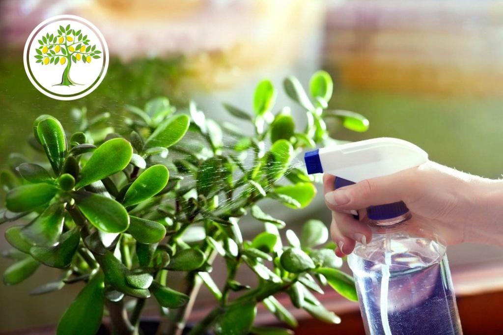 Уход на горшечными растениями