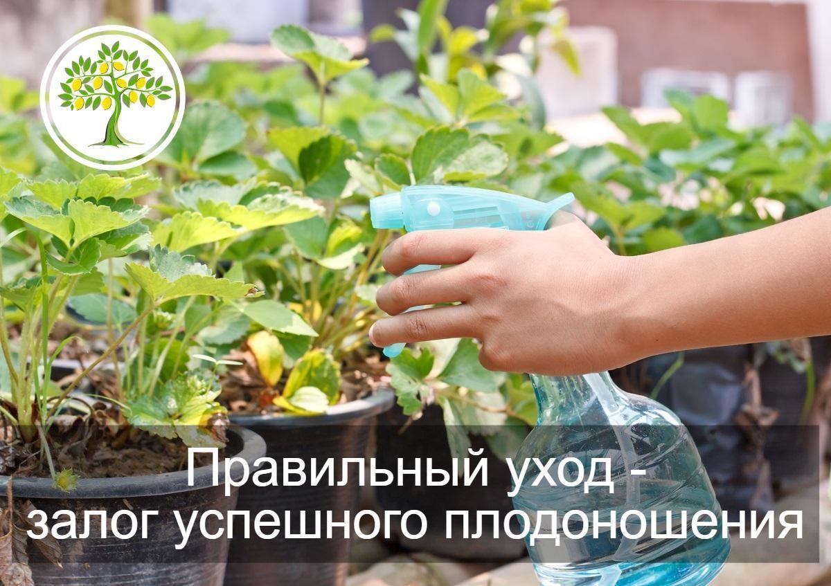 уход за растениями для дома и офиса в Краснодаре
