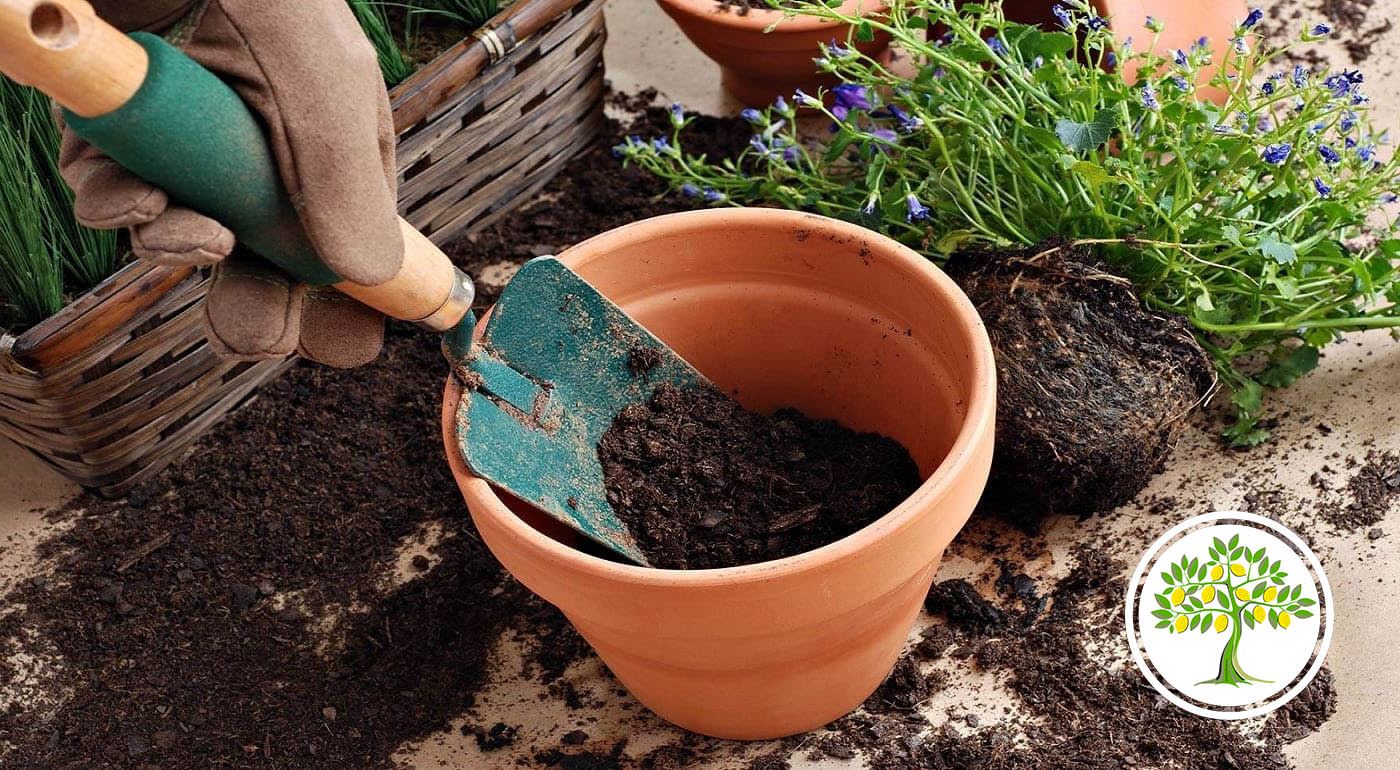 Пересадка растений в новый грунт