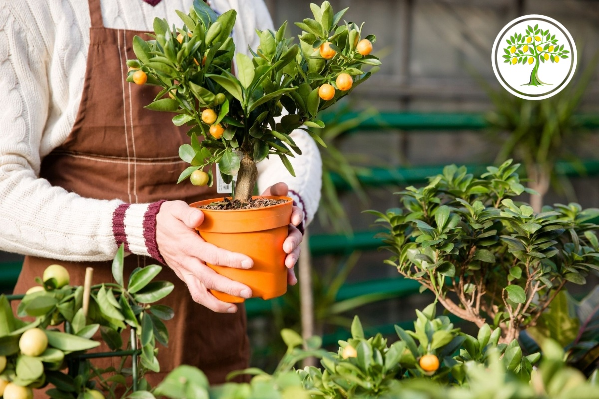 уход за горшечными растениях